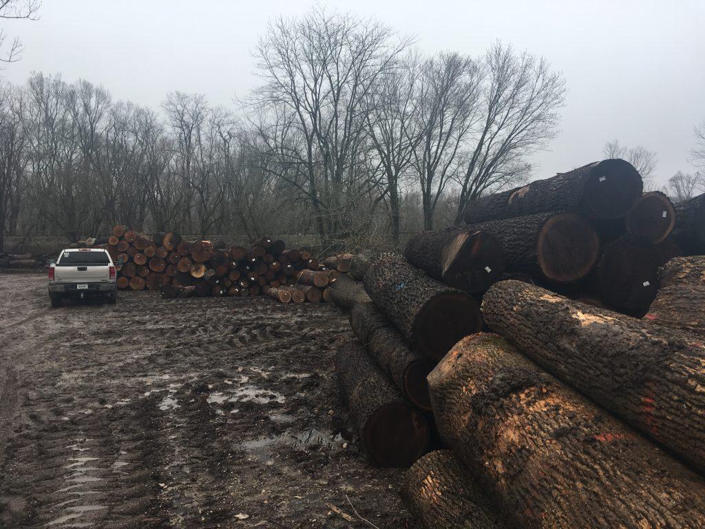 lumber yard visit