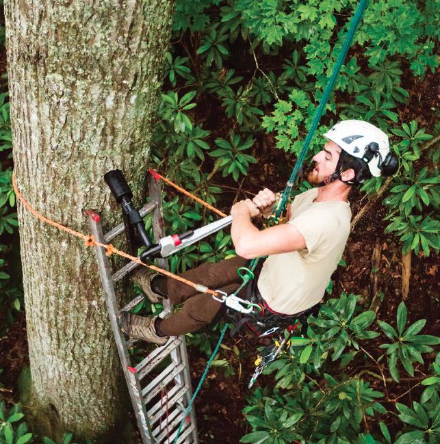 treehouse bolt
