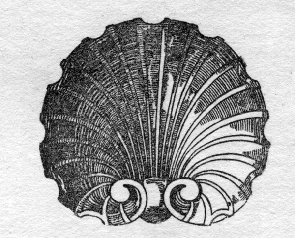 escalloped-shell