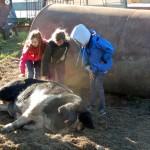 Children admire the farm's biggest pig.