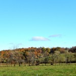The hills of the Taconic Mountains where the farm is located.