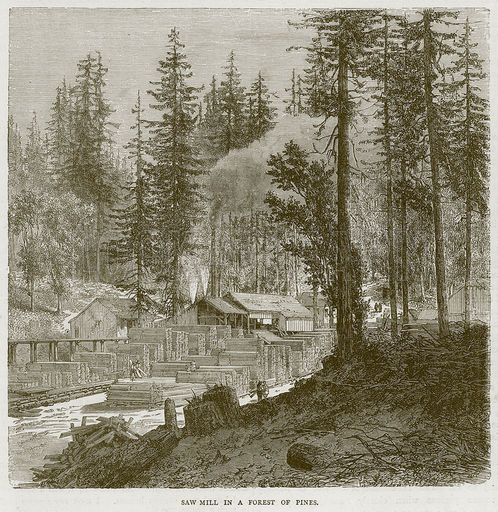 Saw Mill in a Forest of Pines. Illustration from Illustrated Travels edited by HW Bates (Cassell, c-1880)